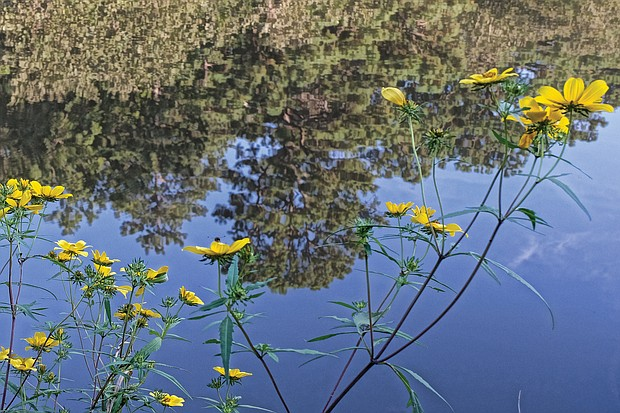 Reflection in Forest Hill Park (Sandra Sellars/Richmond Free Press)