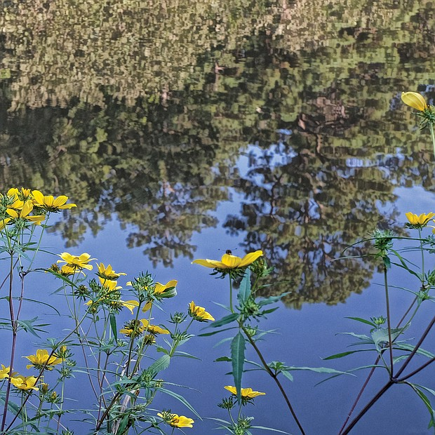 Reflection in Forest Hill Park (Sandra Sellars/Richmond Free Press)