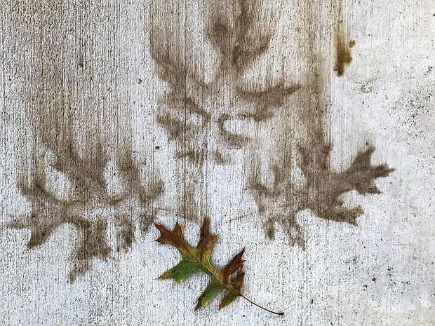 Images of leaves in the West End (Sandra Sellars/Richmond Free Press)