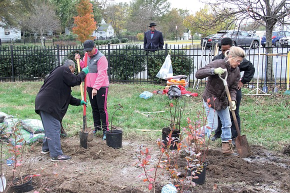 Volunteers planted fruit trees and raspberries and blackberries last week on part of the lawn at Faith Community Baptist Church ...