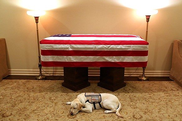 Sully H.W. Bush, a yellow Labrador service dog who worked with the late former President George H.W. Bush, will be ...