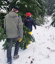 A permit allows National Forest visitors to harvest a Christmas tree from designated areas. Personal use Christmas tree cutting permits for $5 are now available at National Forest offices and from local vendors.