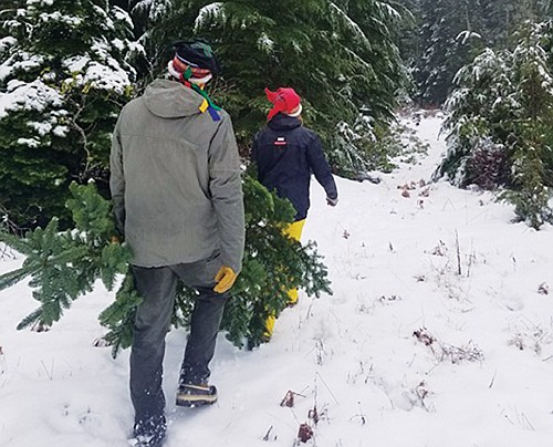 Personal-use Christmas tree cutting permits from the Mt. Hood and Pinchot National Forests near Portland and Vancouver are now available ...