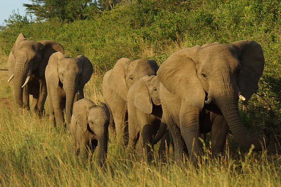 Africa has an embarrassment of riches for wildlife adventures. You have myriad options when you're ready to explore the continent. ...