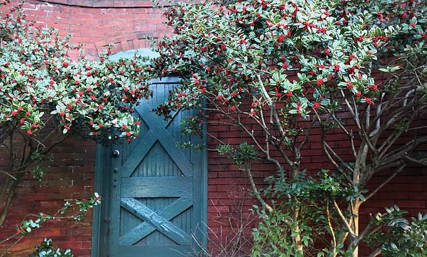 Holly at Richmond Hill in Church Hill (Regina H. Boone/Richmond Free Press)