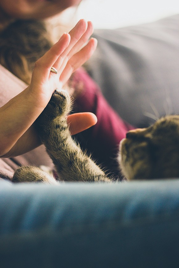 This column is dedicated to my family's loved and late cat, Mittens. Born with deformed front feet that resembled mittens, ...