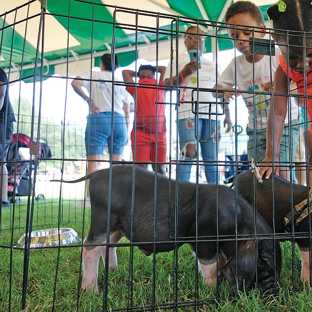 Fun at RVA Community Fun Day/ E.J. Quallis, left, and his sister, Bailey, pet baby pot belly pigs last Saturday at RVA Community Fun Day in Henrico's Dorey Park. Several hundred people attended the free event sponsored by Real Talk with Monica, Rising Towards Success and Dominion Energy. (Sandra Sellars/Richmond Free Press)