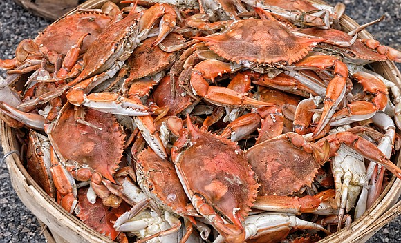 "James E. ""J.J."" Minor once again is hosting a free crab feast to promote voting and community togetherness."