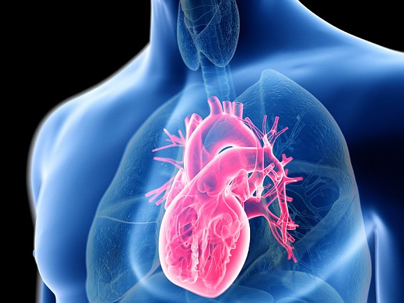An incurable condition called hypertrophic cardiomyopathy may be less deadly than previously thought, according to a new study of sudden ...