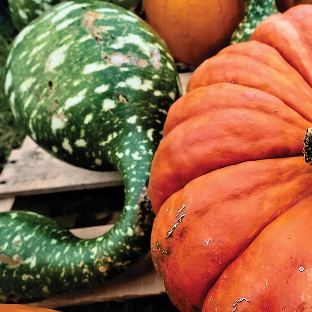 Pumpkins in North Side