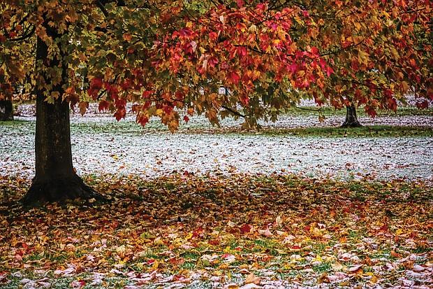 Foliage in Byrd Park