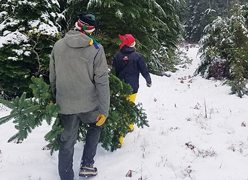 National Forest Service permits allow the cutting of a Christmas trees in designated areas.