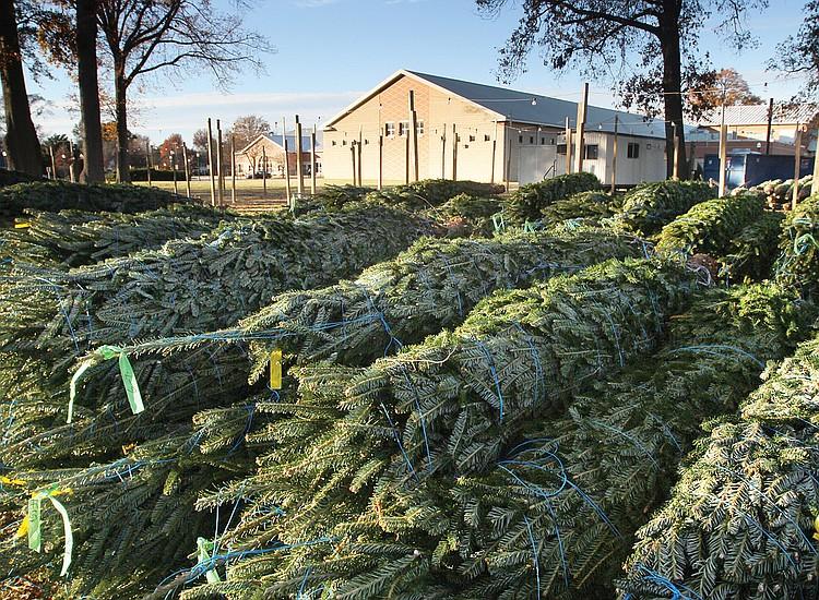 Christmas In Richmond Va 2020 Area Christmas tree disposal, recycling sites announced | Richmond