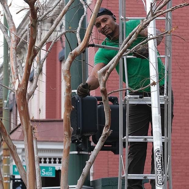 Winter is pruning time, and landscaper George Crump takes advantage of a recent unseasonably warm day to get some pruning done. He is cutting branches of a tree at the corner of Marshall and Adams streets in Jackson Ward.