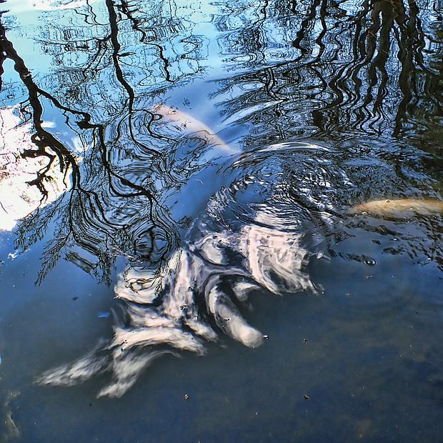 A pond near Japanese Garden at Maymont