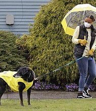 Dog walker Imaj Royster, wearing a protective mask against the coronavirus outbreak, looks back as her charge Hazard is distracted during a stroll in the rain Monday, March 30 in Seattle.   (AP photo)