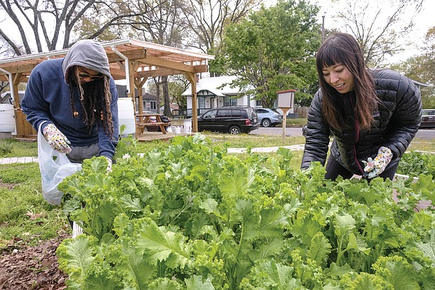 Deneen Tyler, left, and Marcella Lee pick kale.