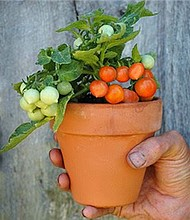 William Paca Garden Plant Sale