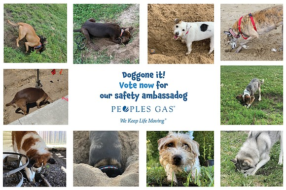 Dogs love to dig, but people need to be reminded to call 811 to make sure that digging is safe ...