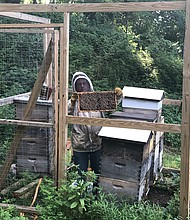 Apiarist Bill Castro holding up a beehive in the apiary at Stillmeadow Community Fellowship Church in Baltimore.
