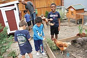 After a morning of online learning, Richmond Public Schools students in the Northside Pod Life's elementary group use a mid-day recess to feed the chickens and gather eggs laid by hens in the backyard of pod leader Adam Evans. The youngsters are, from left, Bastian Van-Zandt (back to camera), Sebastian Wisnoski, Blaize Evans (holding egg basket) and Ace Evans with his dad and pod leader at the chicken coop.