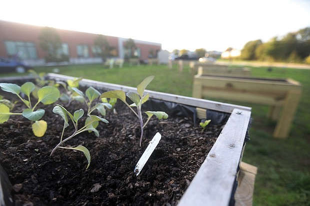 Richmond Public Schools' first Restorative Urban Garden — including boxes planted with collards and other winter crops — takes shape on the grounds of Martin Luther King Jr. Middle School.