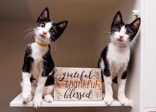 Although there might be fewer human visitors, one thing that's certain is that many American homes have newly adopted dogs and cats to be thankful for— and pets are grateful to be spending the holiday in foster homes. Many people are counting their blessings with a pet in their home for the first time.