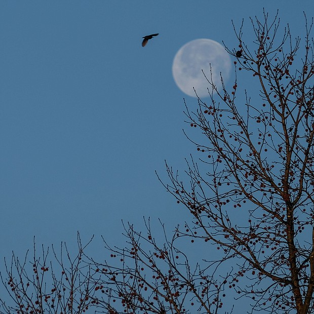 A hovering moon in the West End