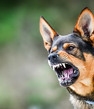 Alexander Baxter was already sitting on the floor with his hands in the air when a Nashville police dog was released and bit him, sending him to the hospital. A court found that the officer responsible was protected by qualified immunity and could not be sued.