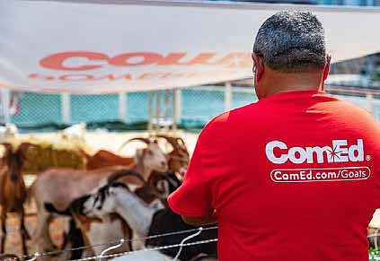 ComEd's four-legged employees took a break from eating vegetation under power lines in Pekin, Ill., for a boat cruise on ...