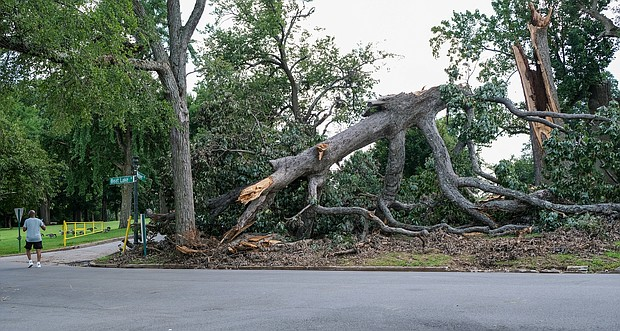 This fallen monster of a tree in Byrd Park exemplifies the damage that has resulted from repeated heavy rains in recent weeks. Location: Boat Lake and Westover Drive. The photo was taken Aug. 19, but it is unknown when the tree fell. Richmond was spared substantial impact from the remnants of Hurricane Fred, which largely bypassed Central Virginia as it moved North. So far during August, the Richmond area has recorded 8.22 inches of rain – or the equivalent of 80 inches of snow. The total rainfall is about 5 inches more than the 10-year rainfall norm for August. The rain spigot was turned off in much of Metro Richmond this week as hot, humid days returned. The forecast indicates that isolated thunderstorms may roll through again on Saturday and Sunday.