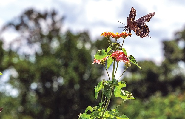 Butterfly at Maymont
