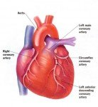 HEART DISEASE: A structural or functional abnormality of the heart, or of the blood vessels supplying the heart, that impairs ...