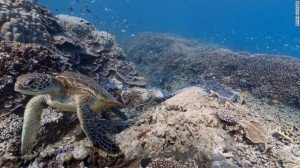 "[caption id=""attachment_70589"" align=""alignnone"" width=""300"" caption=""Google is partnering with the Catlin Seaview Survey to bring undersea imagery to Google Maps. This ..."